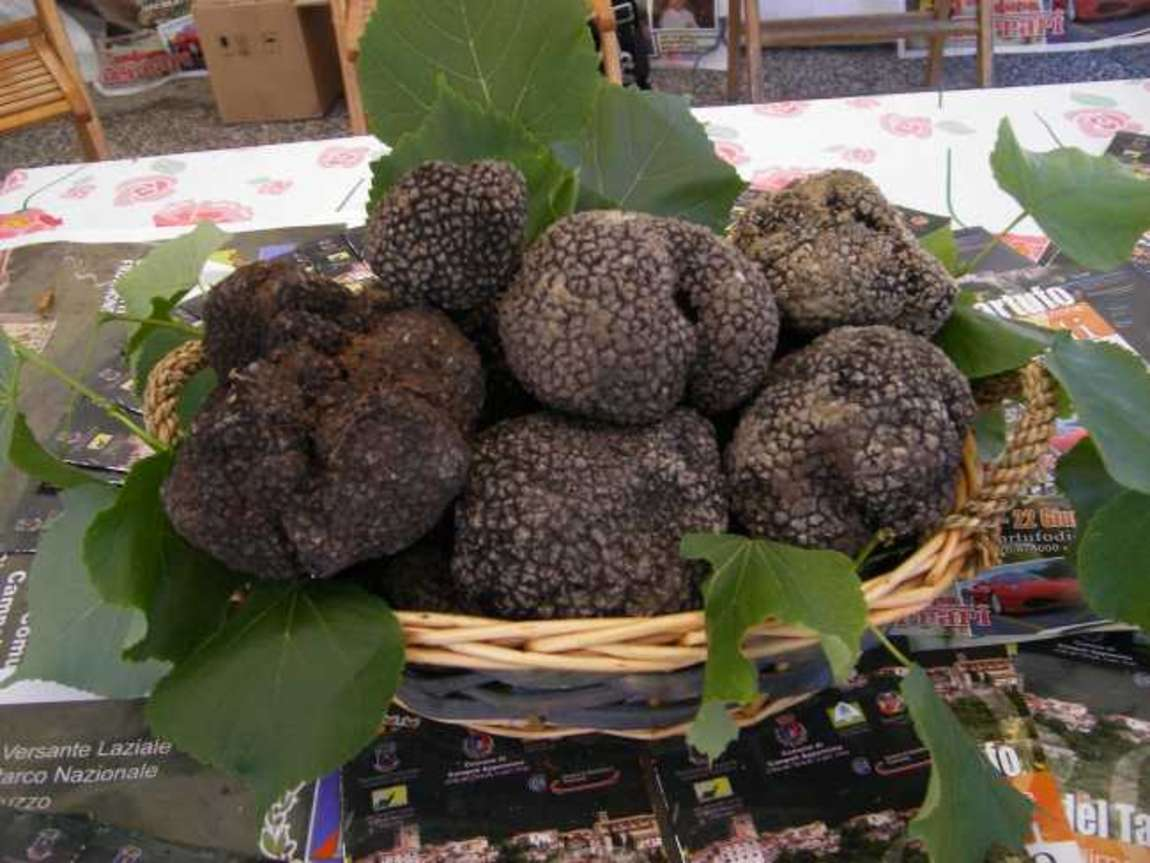 Black truffle Italy